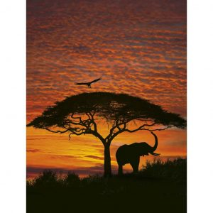 Komar Fototapete National Geographic African Sunset 194 x 270 cm 4-501 Mehrfarbig 4036834045012
